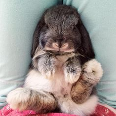 """""""This happened today and I almost died from a cuteness overdose! #livesweetlop"""""""