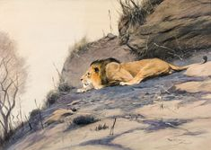 One can almost imagine how the artist Kuhnert lay in wait in the wilderness, sketching the majestic cats, and then painting them on monumental canvases in his studio in Berlin. No wonder that he was one of the most important animal painters of his time. Animal Painter, Catalogue, 19th Century, Lion, Canvases, Painters, Wilderness, Austria, Sketching