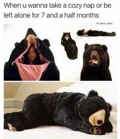 When U Wanna Take A Cozy Nap Or Be Left Alone For 7 And A Half Months - Funny Memes. The Funniest Memes worldwide for Birthdays, School, Cats, and Dank Memes - Meme Memes Humor, Funny Memes, Humor Quotes, Gif Humour, Funny Quotes, Hard Quotes, Silly Memes, 9gag Funny, Haha