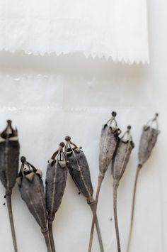 Fotosache Arndt: Winter flowers - poppy seed pods