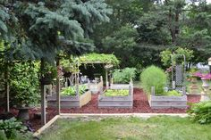 Love the raised beds.  That would keep the dog out of the veggies.