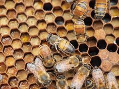 Scientists say humans certainly caused the spread of the virus that's killing honeybees