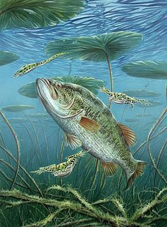 - Art by Curtis Atwater - Nature Art & Wildlife Art - Popular Game Fish and Wildlife - Atwater Art Fishing Photography, Underwater Photography, Wildlife Paintings, Wildlife Art, Bass Fishing Pictures, Fish Artwork, Underwater Art, Fish Drawings, Fishing Techniques