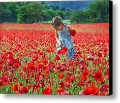 In The Poppy Field Canvas Print / Canvas Art By Keith Armstrong