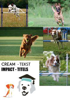Moodboard 3, foto's van springende/rennende honden, logo combinatie van de twee gegeven. fonts staan vast