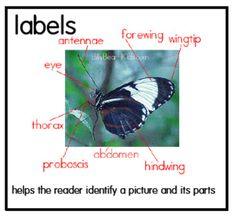 NF-Labels