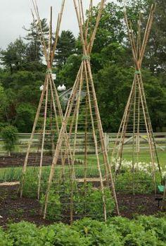 longwood gardens - veggie trellising