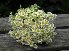 Wedding Flowers from Springwell: Summer Wedding Flowers- Check Out Feverfew, Part 1