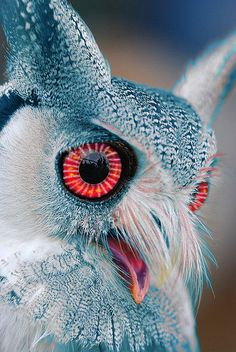 Ƹ̵̡Ӝ̵̨̄Ʒ ❀~•♥•~What an adorable Owl....those amazing eyes!!!!!  http://samissomarspace.wordpress.com