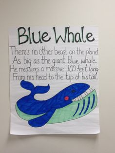 PYP Oceans: Blue Whale poem from Commotion in the Ocean Ocean Theme Crafts, Ocean Themes, Under The Ocean, Under The Sea Theme, Ocean Poem, Sea Poems, Whale Crafts, Jonah And The Whale, Ocean Unit