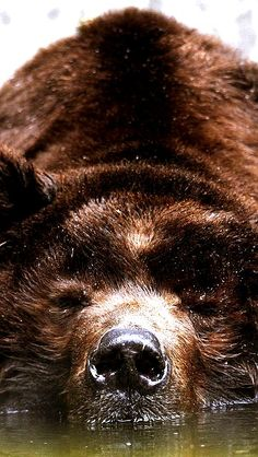 brown bear | Very cool photo blog                                                                                                                                                                                 More