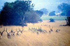 Lohnt sich ein Safari Urlaub in Ruanda im Herbst?