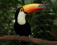 Imagenes tiernas de animales salvajes bonitos en Costa Rica.