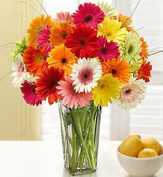 I have always loved Gerbera Daisies...they bring a smile to my face! I just found out that growing them indoors is GOOD for you!!! They purify the air! Amazing! :)