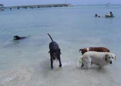 Dog Beach - Key West