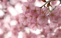 ветки, розовые, цветы, весна, макро, цветение, небо, деревья, лепестки, сакура…