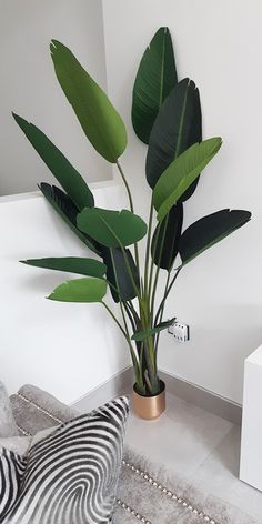 Shop artificial strelitzia plant at Blooming Artificial. Big Indoor Plants, Real Plants, Faux Plants, Exotic Plants, Indoor Trees, House Plants Decor, Plant Decor, Indore Plants, Flowers