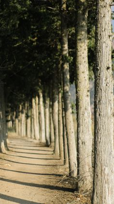 row of trees by portraits on Creative Market