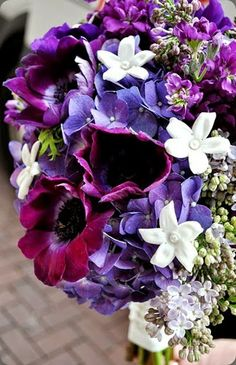 stephanotis /  courtenay lambert florals