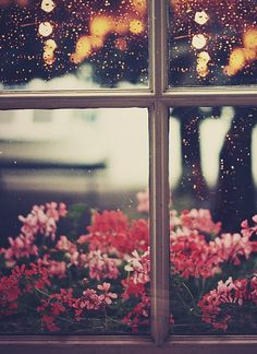 Life through a glass window // Inspires me to capture moments from a new perspective.