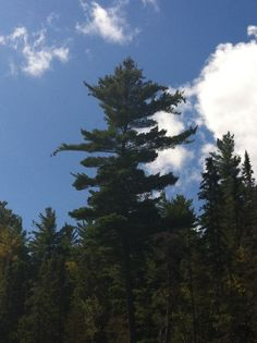 Group of Seven - Inspiration - Northern Ontario