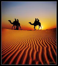 Safari in the Thar Desert, India