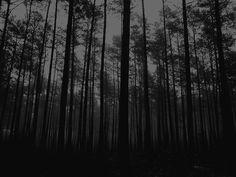 Dark Landscape, Dark Pictures, Dark Forest, Landscape Photographers, Solitude, Painting Inspiration, Instagram Feed, Darkness, Creepy