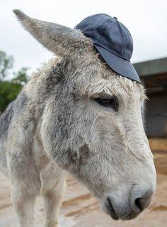 Donkeys, Burritos, Animals Beautiful, Goats, Cute, Image, Pencil Drawings, Animaux, Breakfast Burritos