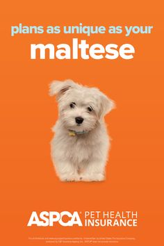 Every breed has different health needs. ASPCA Pet Health Insurance plans were designed with the needs of Malteses in mind. Return to your quote today to view customized plan options for your pet. Health Insurance Plans, Pet Insurance, Health Care Coverage, Maltese, Dog Cat, Quote, Pets, Fun, Animals
