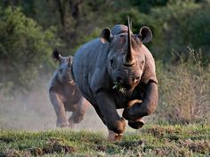 pictures of rhinoceros | Finding Your Rhino Moment and Grabbing It | Career Girl NetworkCareer ...