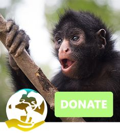 There are different ways to donate. Spectacled Bear, Wildlife