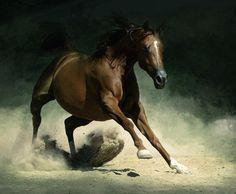 caballos hermosos arabes - Buscar con Google