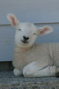 happy, happy, happy! When I was a young girl at my grandmas... The neighbor lady had a lamb and every time I'd visit I'd visit the lamb and of course she grew up into a beautiful sheep. RIP grandma and god be with those who are now at a distance and those who forever have a piece of your heart.