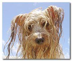 Beaufort YMCA's Puppy Plunge