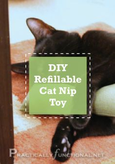 Cats will love this simple, refillable DIY catnip toy.