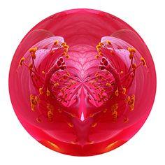 Hibiscus Heart by Greg Miller-Hard