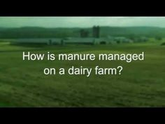How is manure managed on a dairy farm?