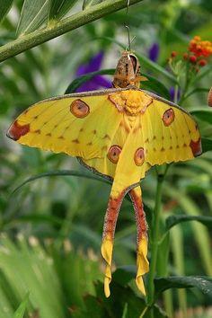 """""""Balerin kelebeği"""""""