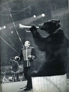Circus bear blowing a trumpet