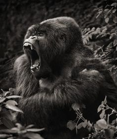 Nick Brandt  Yowza!  The great Nick Brandt always hits it out of the ballpark... Powerful. <3