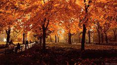 Fallen Leaves, Apple Pies & Cinnamon