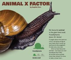 This article asks us to consider why we like some animals more than others and whether this matters when it comes to conservation. Earthworms, Biologist, Fern, Factors, Conservation, Things To Come, Notes, Colour, Play