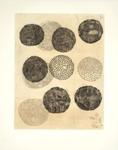 Terry Winters(born 1949), Album #2, 1988, Etching on paper, 522 x 405 mm  © Terry Winters License this image