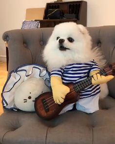 Cute Little Animals, Cute Funny Animals, Funny Dogs, Cute Animal Photos, Cute Animal Videos, Fluffy Animals, Animals And Pets, Cute Puppies, Cute Dogs