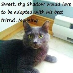 """Shadow would very much love to be adopted together with his best friend, Morning. """"Shadow is very appropriately named. Not only is he quiet like a shadow (he's not a talker) but he is my little shadow, following me everywhere I go. This little love sponge doesn't ask for much in life - all he wants is love and affection. But he's not pushy or needy about it. If you're in the middle of something, he's perfectly content just to be in the same room as you.""""  Meet him…"""