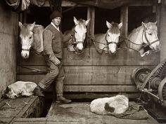 Herbert PONTING - Captain Lawrence Oates and Siberian ponies on board 'Terra Nova' (1910)