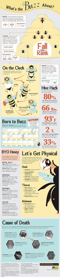 Infographic: The Buzz on Honey Bees - Follow along in the fascinating and complex world of Honey bees. (HobbyFarms.com)