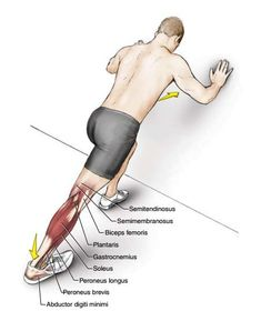 6 Exercises to Stretch Your Toes, Ankles, Soleus and Gastrocnemius Muscles - The Health Science Journal Hamstring Muscles, Muscle Stretches, Ankle Stretches, Stretch Calf Muscles, Peroneus Longus, Stretches Before Workout, Soleus Muscle, Gastrocnemius Muscle, Stretching
