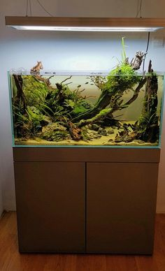 Simon's Aquascape Blog — Favourites: tank by Adam Golik Very unique set up....