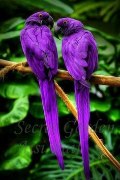 What gorgeous birds. Exotic birds have such beautiful colors.